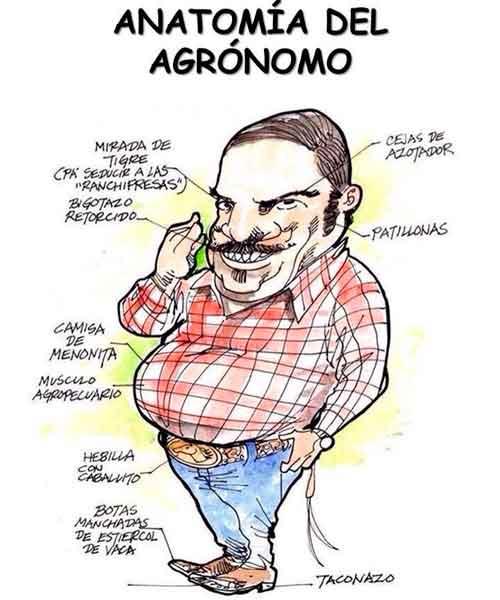 anatomia-del-agronomo