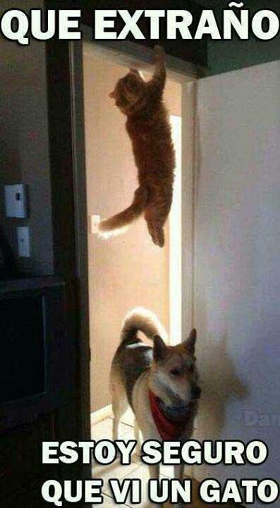 estoy-seguro-que-vi-un-gato