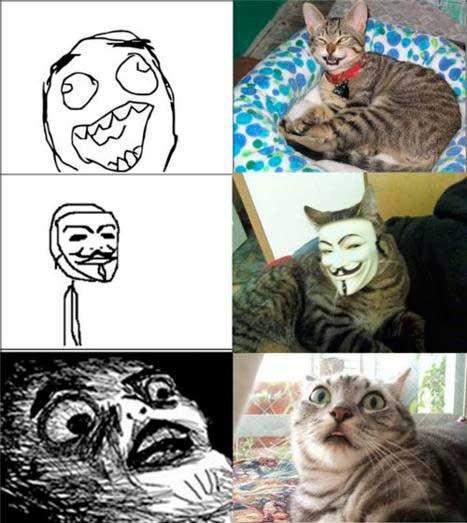 memes-gatos