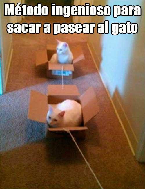 modo-ingenioso-para-pasear-gatos